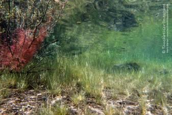 Samaranger See, Tauchen im Samaranger See, Tauchen in den Fernsteinseen