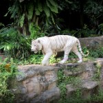 SISTER'S AT SINGAPORE ZOO! + video