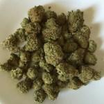 Trimmed Marijuana