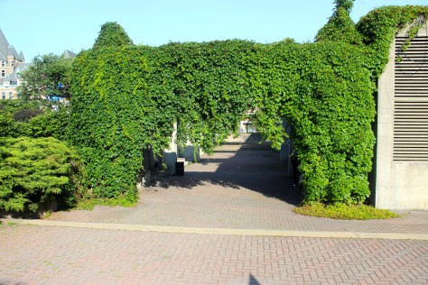 Initially panned by critics for excessive use of cement, the pergolas are now covered in ivy, giving sections of Agora the feeling of a vineyard.