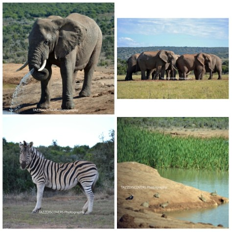 south africa, highlights, roadtrip, things to do, family, travel, kid friendly, addo elephant park, raggy charters, redberry maze, storms river bridge, cape agulhas, monkeyland, birds of eden