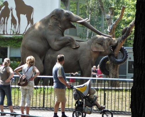 Elephants humping at the zoo,  worst family photos funny pictures random awkward family photos lol