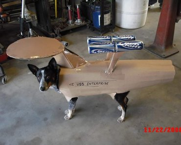 dog in costume that looks like the star ship enterprise from Star Trek. Made from cardboard and bud light cans