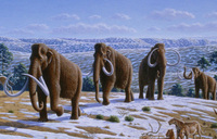 Woolly-mammoth.jpg