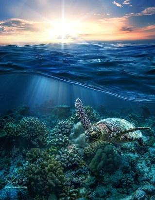 Ocean sunset phone backgrounds wallaper