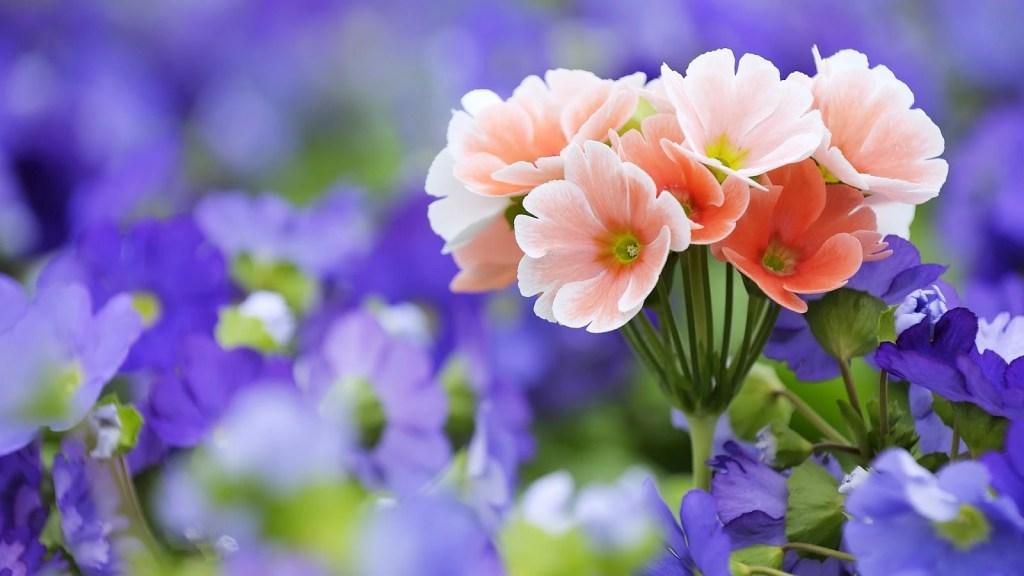 white and violet flower wallpaper