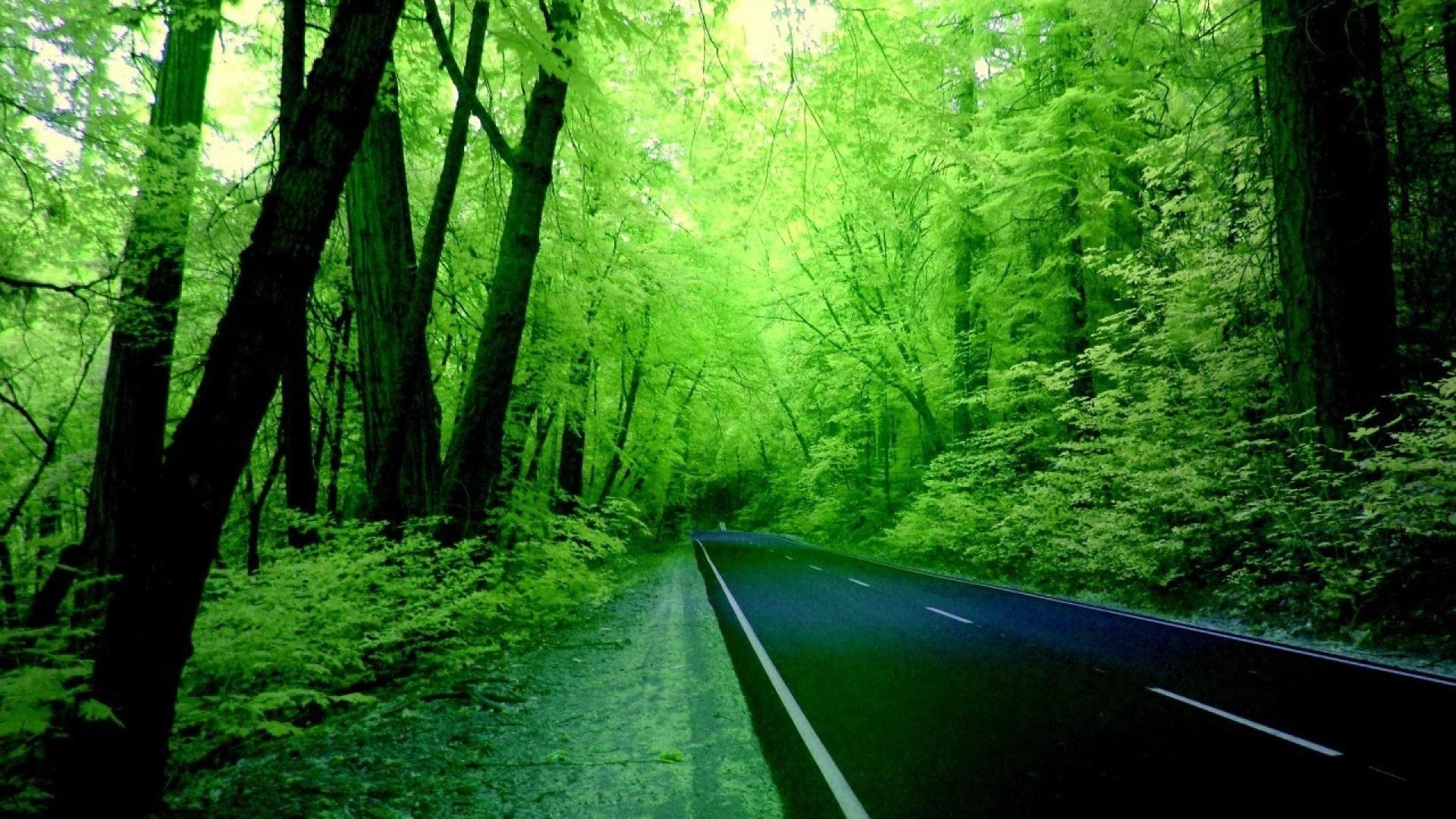 nature-green-wallpaper-hd