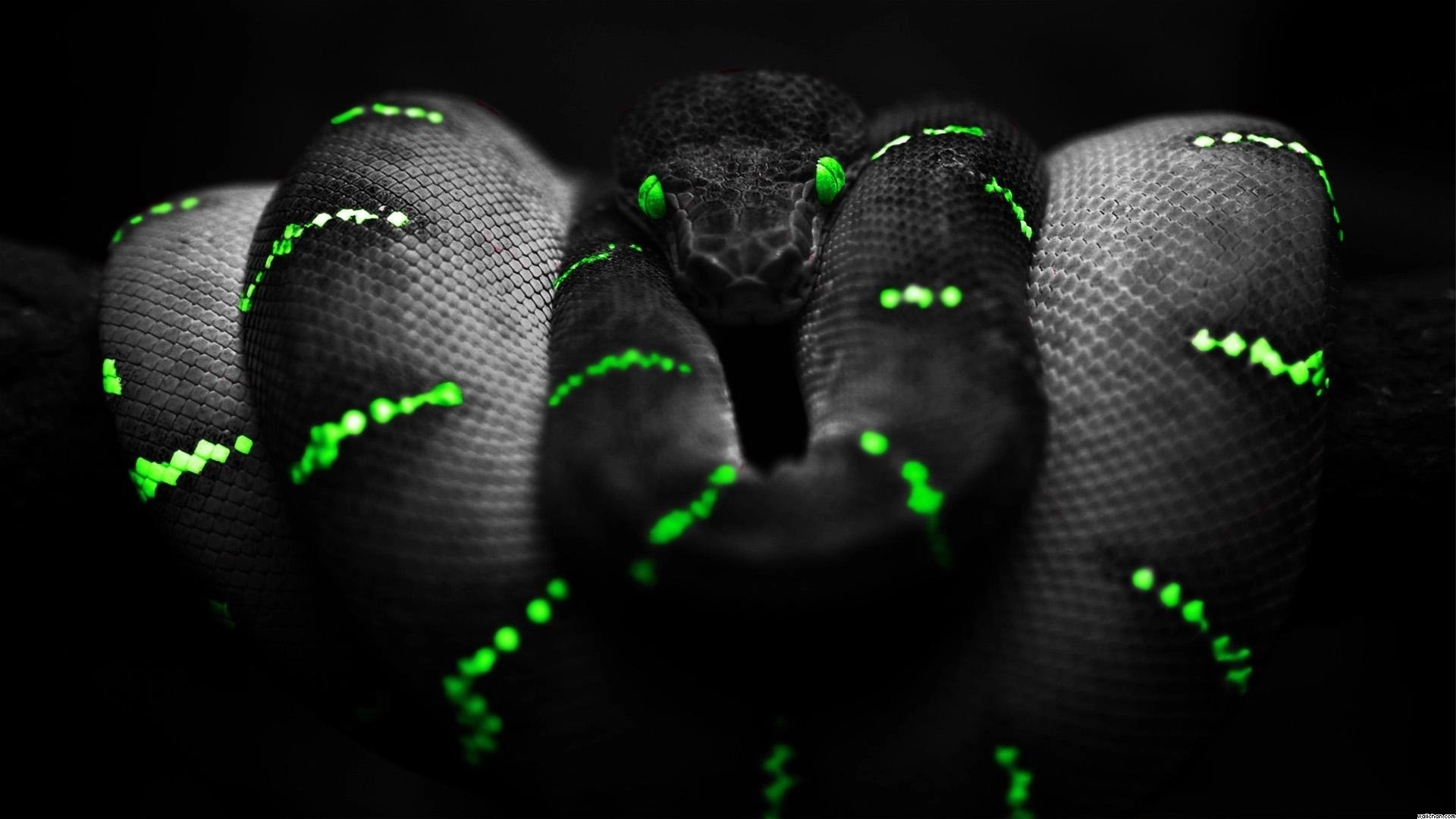 snake Black background