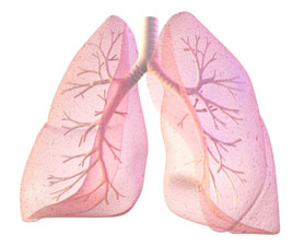 lungs-278x225
