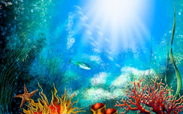 50  Best Aquarium Backgrounds to Download & Print | Free & Premium