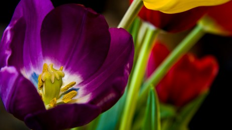 HD wallpapers for Windows 8-beautiful_purple_flower-wide