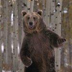 bear-what-up-yo