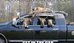 funny-moose-hunting-justice