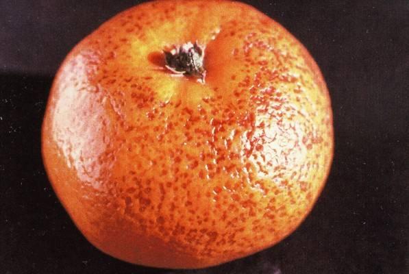 Daños por frio en citricos