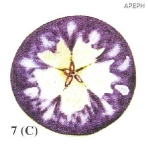 Test almidon fruta pepita tipo circular estado 07