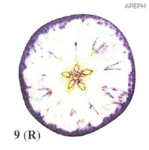 Test almidon fruta pepita tipo radial estado 09