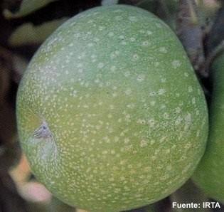 Conservacion de Manzanas Granny Smith