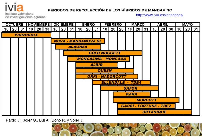 Produccion integrada citricos Calendario de recoleccion hibridos de mandarino