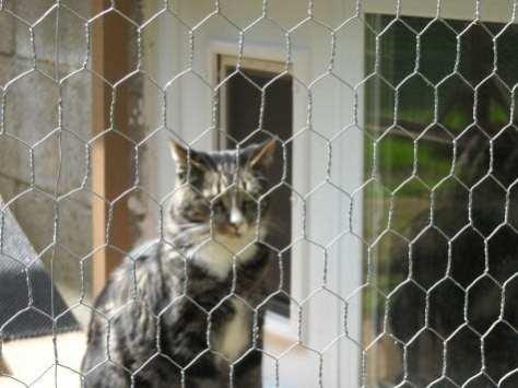 cat enclosure 008