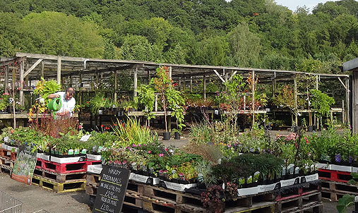 Summer At Teign Valley Nursery
