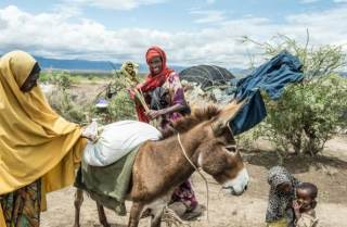Aisha Nor and her children load the families remaining donkeys with food aid