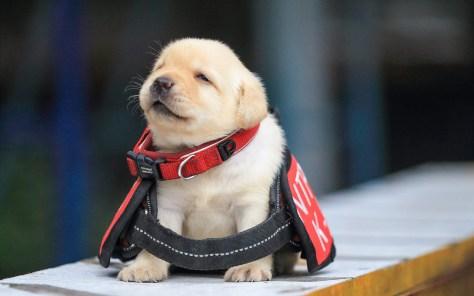 En Australia te pagan mucho dinero por cuidar perros y gatos