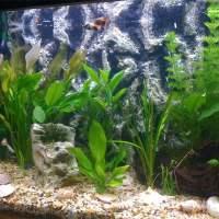fish tank backgrounds printable - 10 Gallon Aquarium Backgrounds Printable