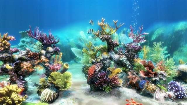 50  Best Aquarium Backgrounds to Download & Print | Free & Premium