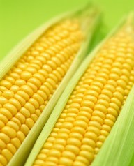 temps de cuisson maïs, cuisson maïs, temps de cuisson mais à la vapeur