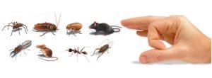 pest-management