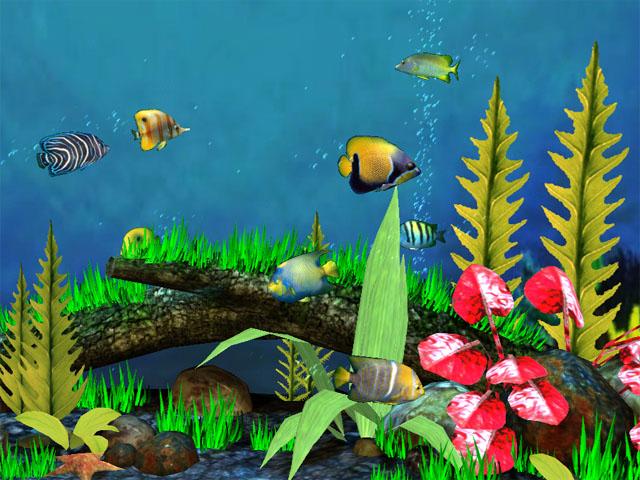 Fish Aquarium 3D Screensaver   Download Aquarium 3D Screensaver