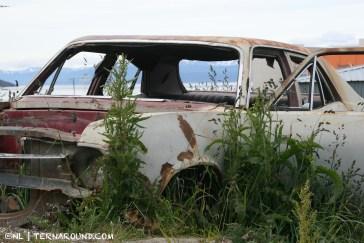 TdF - Ushuaia - road kill 20