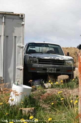 TdF - Ushuaia - road kill 5