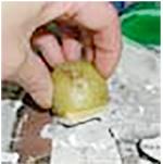 Peindre les pierres du chateau à la pomme de terre