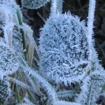 Temperatures drop to below zero in Loei and Phitsanulok