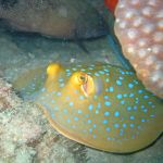 Blowfish kills two Burmese Fishermen and leaves six seriously ill in Sattahip