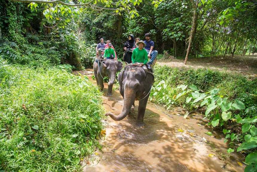 Elephant Trekking and Safari