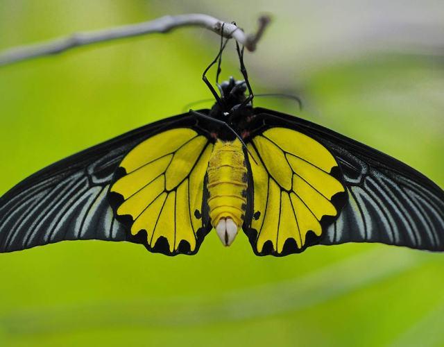 butterfly garden at queen sikit botanical garden