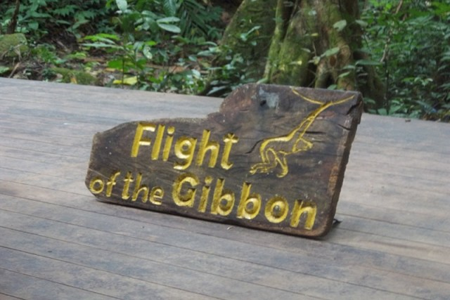 Flight of Gibbon Pattaya Image