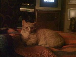 Percy Cat
