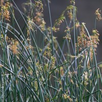 One Word Wednesday: Meadow