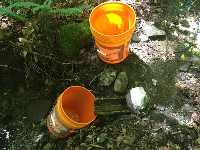 Filling up buckets with water from the creek to haul and filter