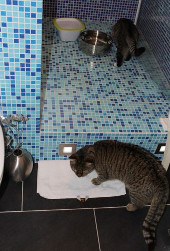 _the3cats_2014_01_04_7811