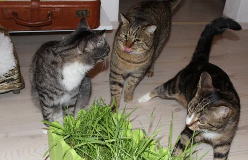 _the3cats_2014_02_07_0889