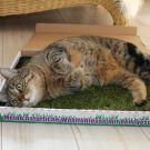 LiJaLuJi: MIAU Katzengras im Test