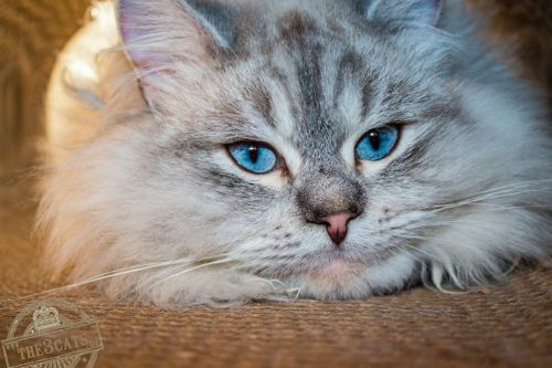 _the3cats_2016_01_08_2650-a