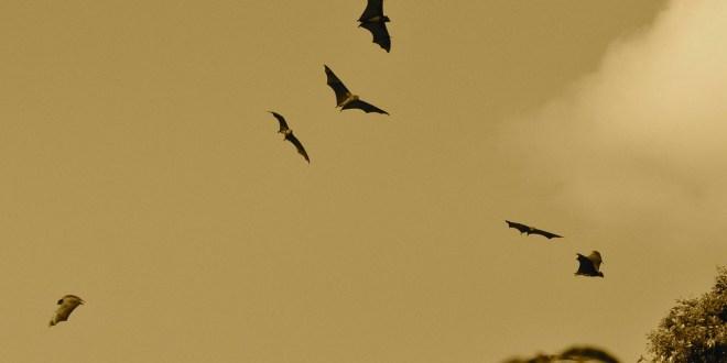 bats-164210_1280