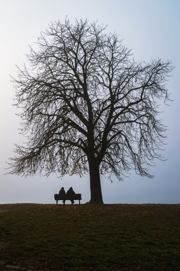 A couple sitting under a leafless tree overlooking the Danube in Belgrade, Serbia