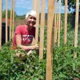 tomato-pruning-2