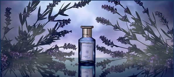 suffolk-lavender